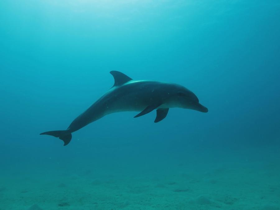 1_Delfin-aegypten