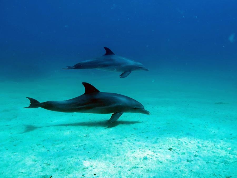 1_Delfine-Rotes-Meer
