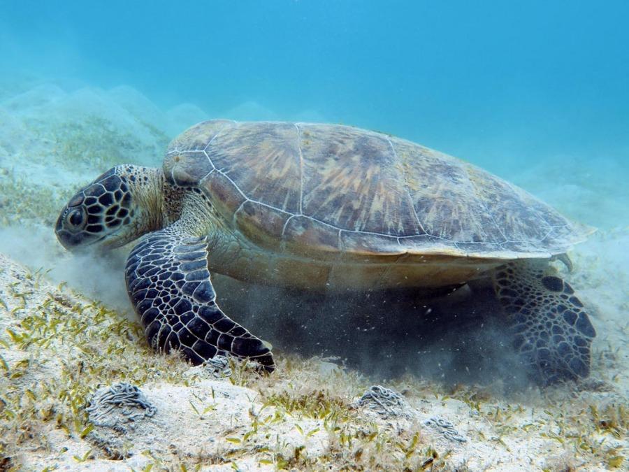 1_Turtle
